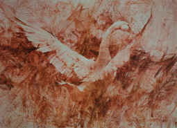 Snow Goose by Richard Schmid